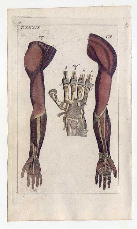 Arme-Hand-Bänder-Sehnen-Medizin-Anatomie - Kupferstich 1810 G. T. ...